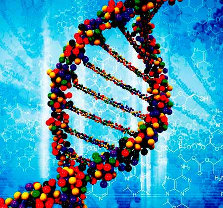 DNA genetics not the answer
